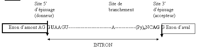 sans-titre-175.png