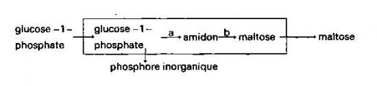 sans-titre-199.png